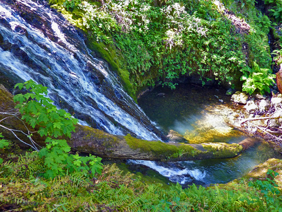 One of many cascades and pools along the Cataract Creek Trail